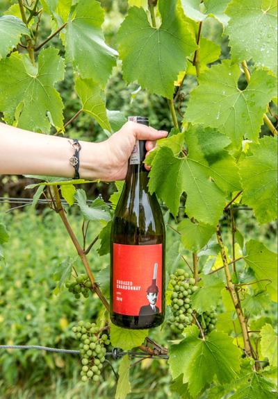 Wino Plungerhead Chardonnay 2016