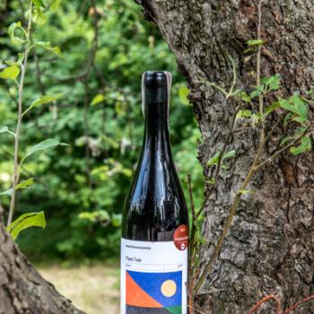 Wino Kamil Barczentewicz Pinot Noir 2019